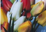 bouquetoftulips