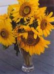 sunflowersinavase