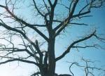 tree_mendon